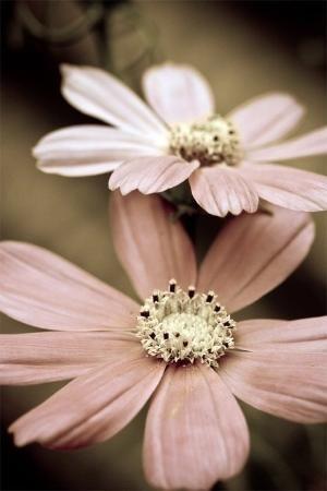 Lastflower